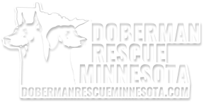 Doberman Rescue Minnesota | Dog Rescue
